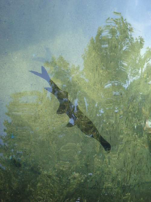 My favorite State Fair oasis, the DNR fish pond...with ancient Paddle Fish