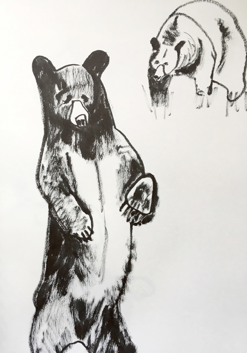 various sketches of bears